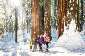 Giant Sequoia Snowbomb (Kim Carroll)